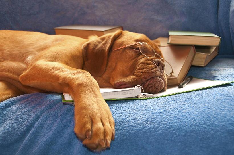 Productivity_dog